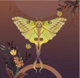 Golden Moon Moth Greetings Card